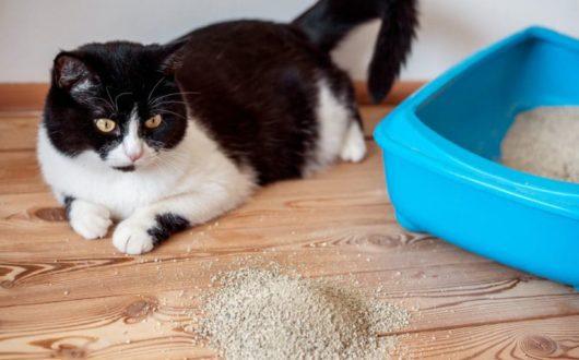 Verstreutes Katzenstreu in der Wohnung