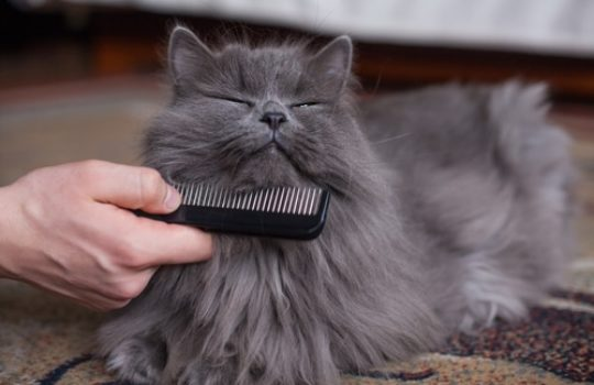 Was hilft gegen verfilztes Katzenfell?