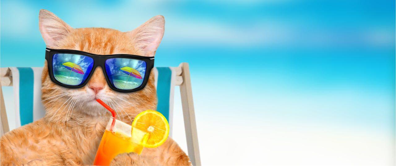 Katze bei Hitze helfen