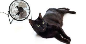 Katze sucht Abkühlung