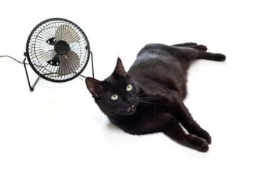 Können Katzen schwitzen? Wärmeregulierung bei der Katze
