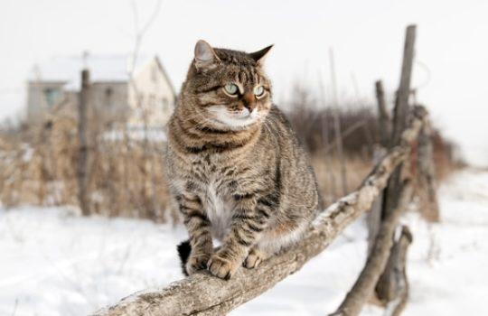 Friert meine Katze im Winter?