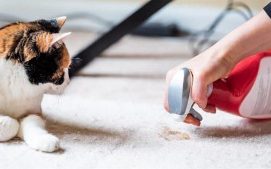 Katze uriniert überall in Wohnung