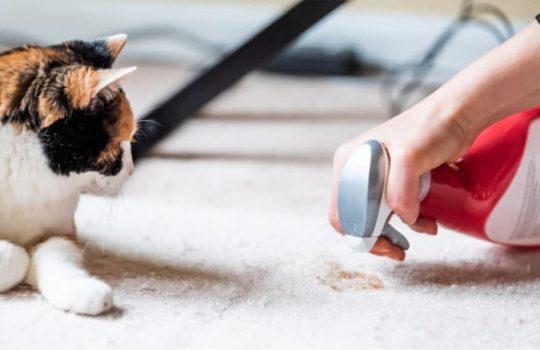 Warum uriniert meine Katze / mein Kater in die Wohnung?