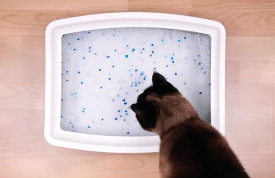 Hilfe meine Katze frisst das Katzenstreu – Ursachen