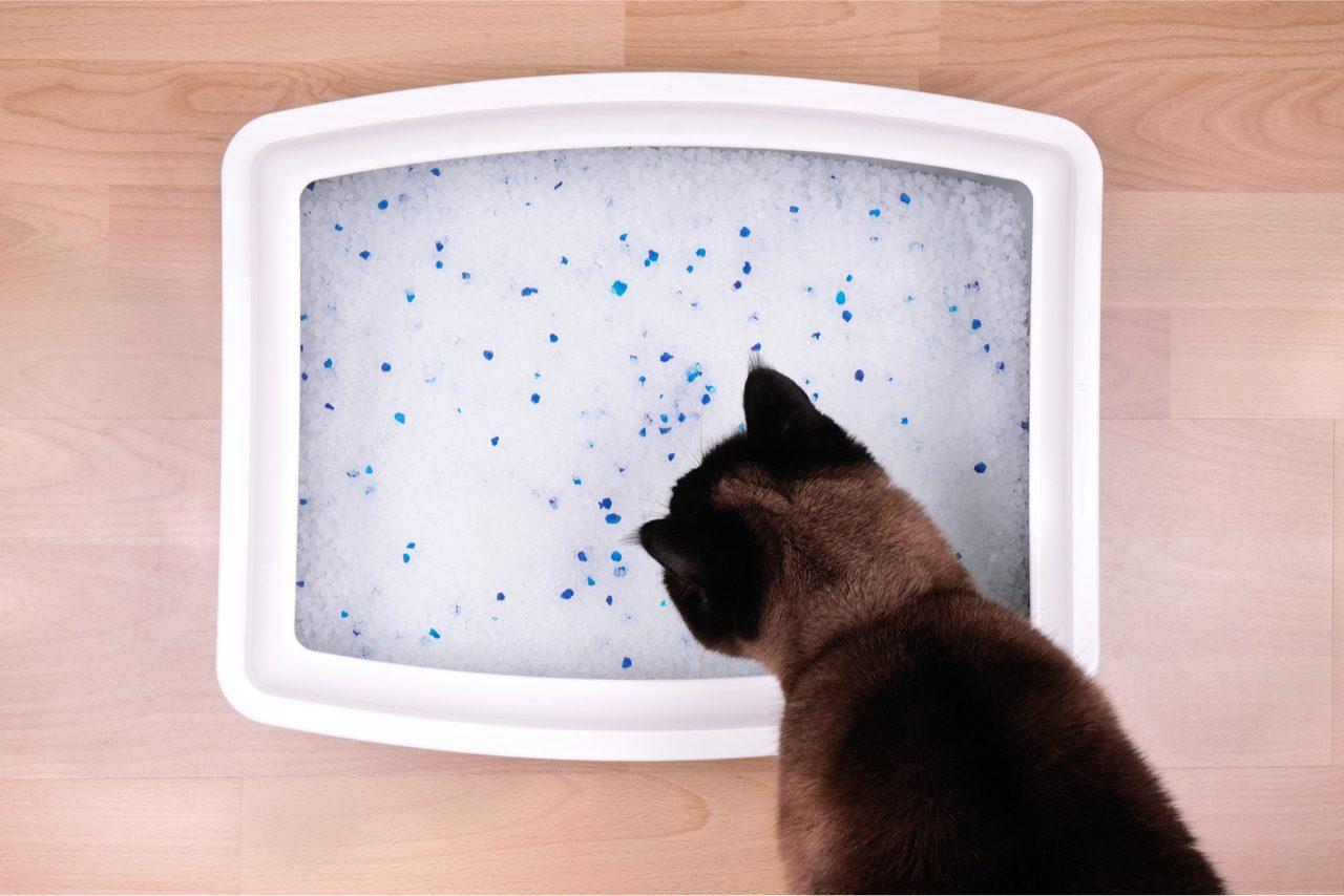 Katze frisst Katzenstreu - Was tun?
