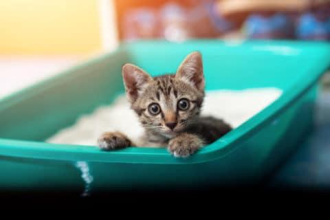 Kitten auf Katzentoilette