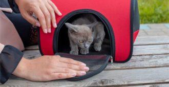 Faltbare Katzenboxen