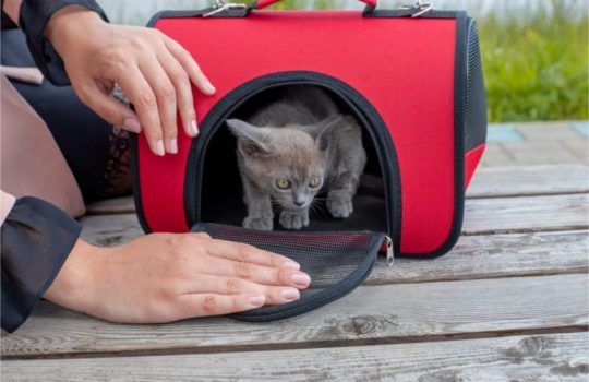 Faltbare Katzenboxen – Praktische zusammenklappbare Boxen für Katzen