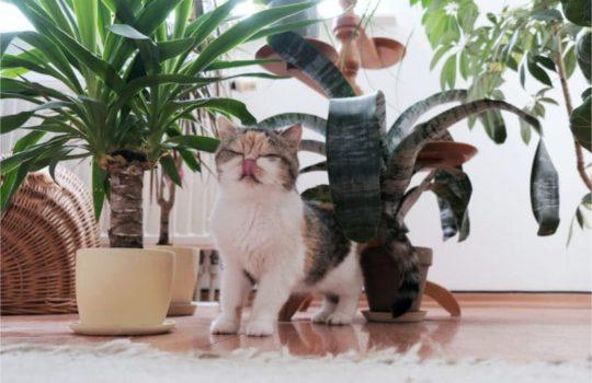 Katze buddelt im Blumentopf – was tun?