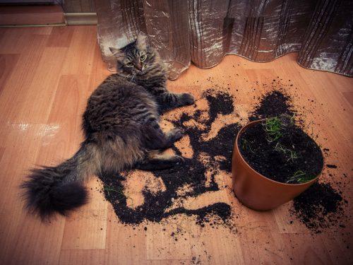 Katze wühlt in Blumentopf