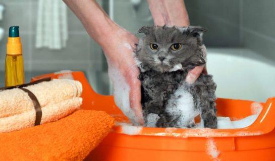 Sollte ich meine Katze baden? Tipps für Katzenhalter