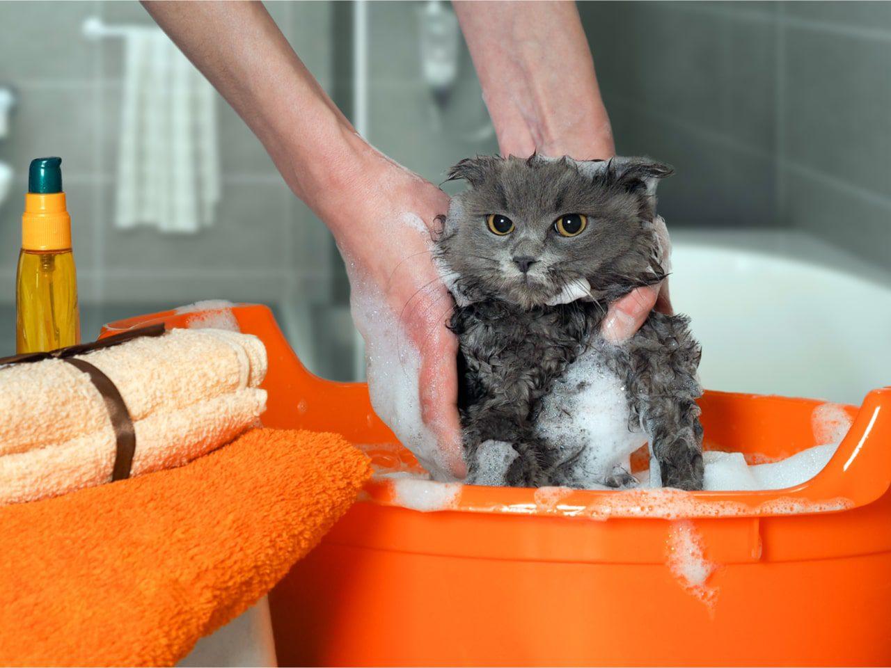 Katze baden