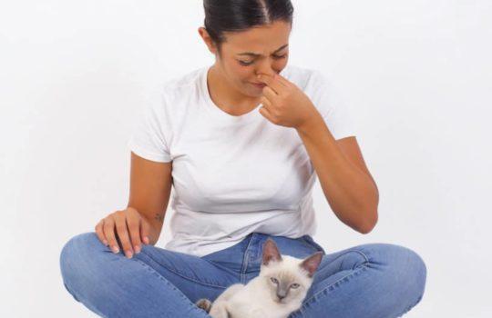Hilfe meine Katze hat Blähungen – Was tun?