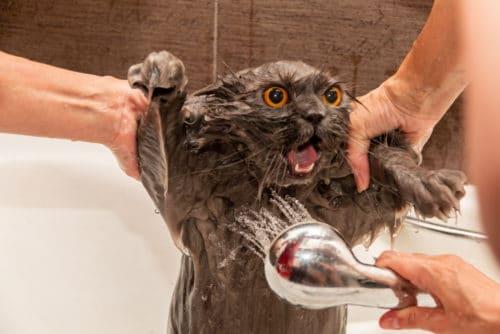 Katze duschen und waschen