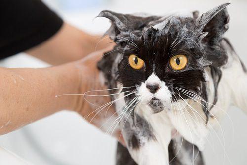 Katzen waschen