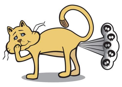 Katzenflatulenzen