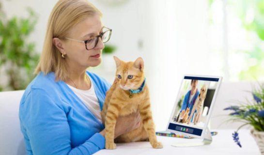 Tierarztberatung Online – Telemedizin für Haustiere