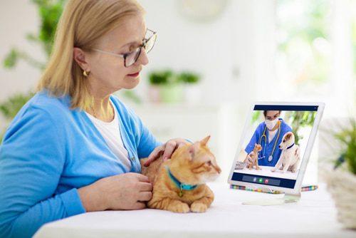 Videochat Tierarzt